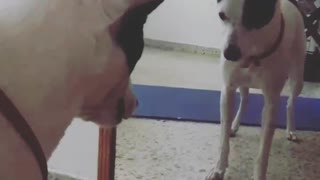 Arguing with the dog in the mirror - Video