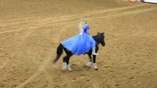 Mustang And Cinderella Perform Without Bridle - Video