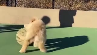 Cute dog playing with ball