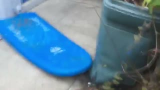 Guy uses blue board to go down stairs