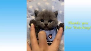 Interesting Pets And Funny Animals Compilation