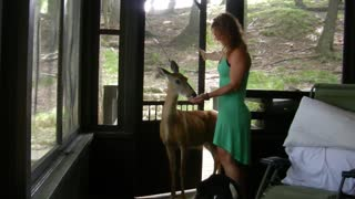 Wild Deer Knocks On Cabin And Asks For Chips