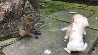 Two Puppies and a Monkey