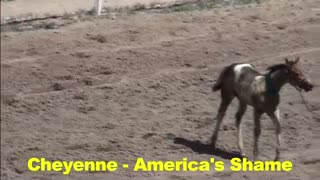 Baby Horses Abused - Video