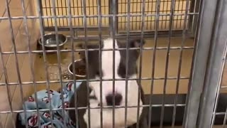 Shelter dog finds out he's going to be adopted