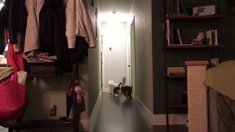 Cat misses doorway, crashes hard into wall