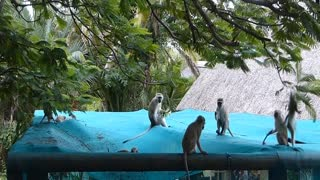 Monkeys jungle gym