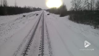 Moose dodge train - Video
