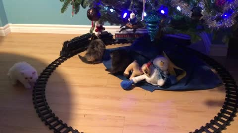 Kittens see a train under the Christmas tree!