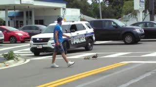 Police Help Mother Duck And Ducklings Safely Cross Busy Street - Video