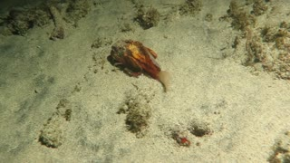 Stingfish In Bali - Video