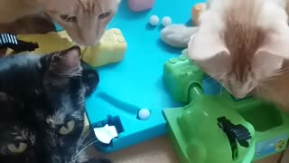 Curious Kittens Gather For A Game Of Hungry Hungry Hippos - Video