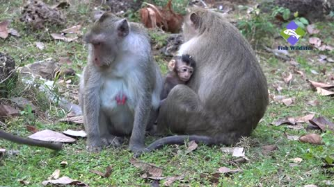 The monkeys care very much for their children, they have a lot of care