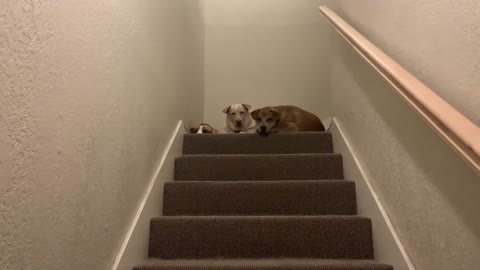 My Dogs Waiting For Me