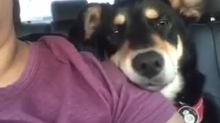 Exhausted pup falls asleep after dog park - Video
