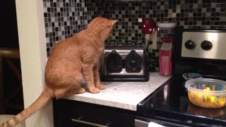 Toaster Spooks Cat On Kitchen Counter - Video