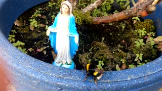 dying bee Climbs To Feet Of Virgin Mary - Video