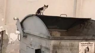 too many cats around the big basket  - Video