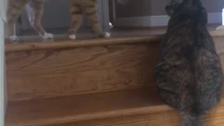 Orange cat playing with cat on staircase