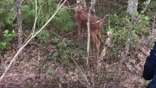 Motorists Help to Reunite Moose with Their Mother