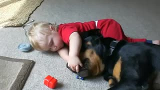 Giant Rottweiler Gently Tosses Around Toys To Baby - Video
