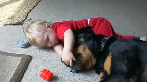 Giant Rottweiler Gently Tosses Around Toys To Baby