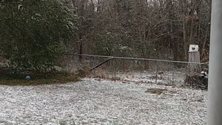 First accumulated snow