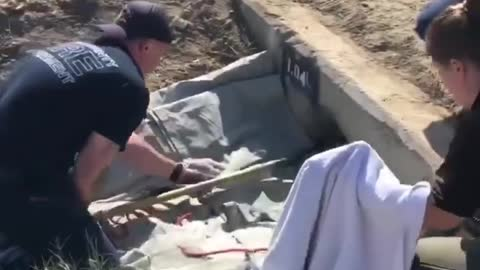 Eight puppies rescued from storm drain