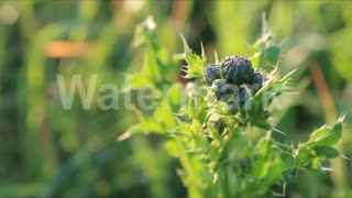 Landscape #1 - Nature and Plants  - Video