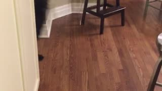 Black dog howls when asked if it had a good walk - Video