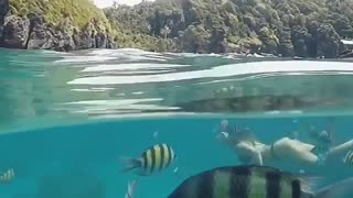 Discover some fishes under the sea in italy