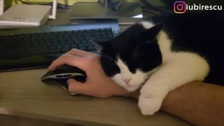 Man documents struggles of working with cats - Video