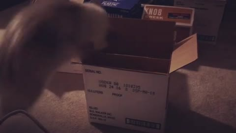 Cat jumps into a box but gets stuck upside down