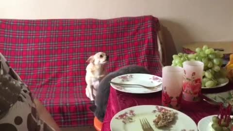 The cat thought that he is a man and sat down at the table
