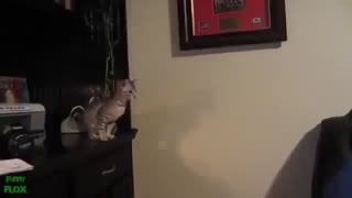Hot Funny Cats Video on Facebook LOL - Video
