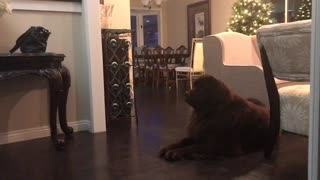 Tired dog thinks he can catch girl while lying down