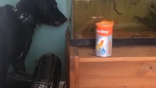 Dog tries to get fish