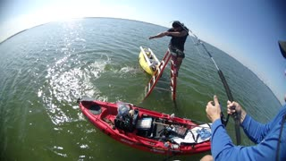Blacktip Shark Caught from Ladder - Video