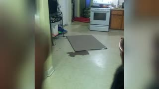 The best fails slip and fall kitchen fail