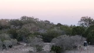 Birds at Sunset from the Blind