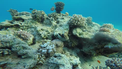 Coral reefs and water plants in the Red Sea 1