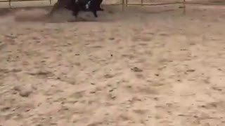 Vibes girl falls off horse running fast - Video