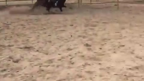Vibes girl falls off horse running fast