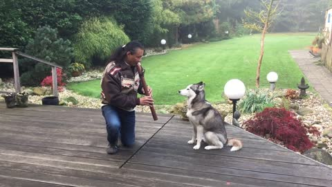 Majestic native flute totally captivates huskies