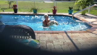 Water-loving Westie refuses to exit pool - Video