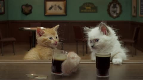Two Kittens Discuss Their Obsessions Over A Glass Of Beer
