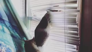 Cat attacks blinds - Video