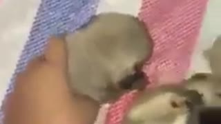 Lovely new puppies  - Video