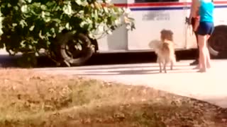 Dog waits for postal worker to bring her treats  - Video