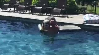 Big fluffy grey and white dog swimming in pool off of floatie
